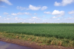 winter_wheat_in_ok.jpg